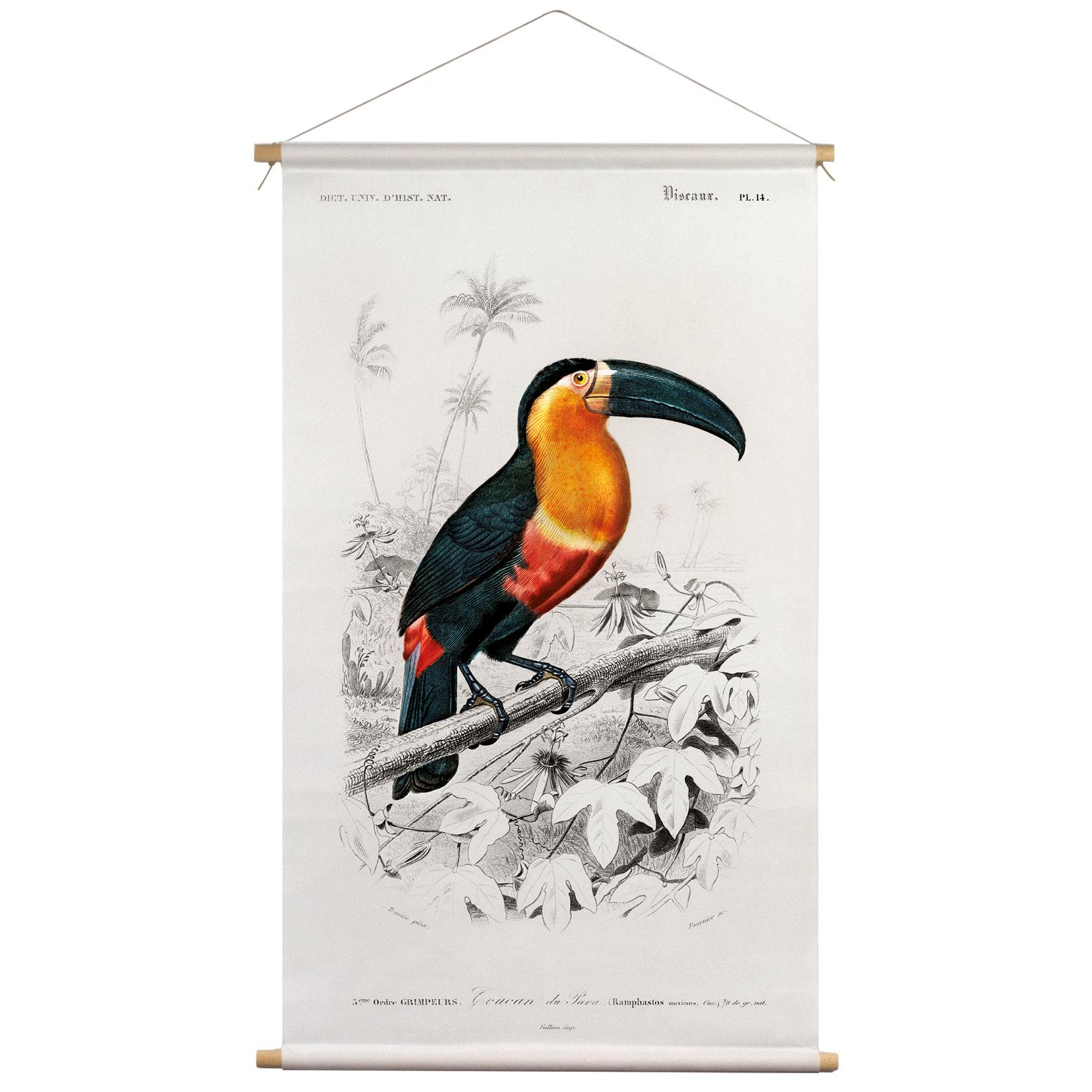 Textielposter Toekan Charles D' Orbigny 65x45cm